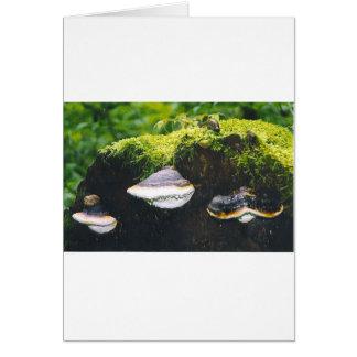 Cartão Cogumelos de Saturn