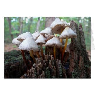 Cartão Cogumelos em um coto velho Notecard