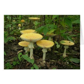Cartão Cogumelos Sprouting