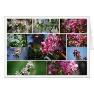 Cartão Colagem das flores de Apple e das abelhas do mel