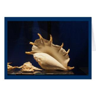 Cartão Coleção de Shell