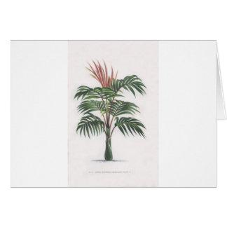Cartão coleção tropical da palmeira - V de tiragem