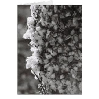 Cartão Colheita do algodão