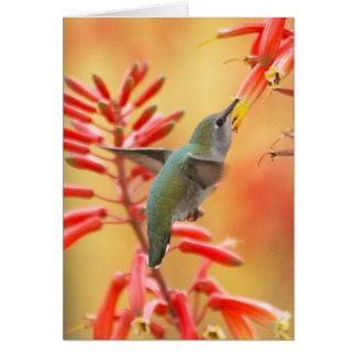 Cartão Colibri cercado pela mandioca vermelha