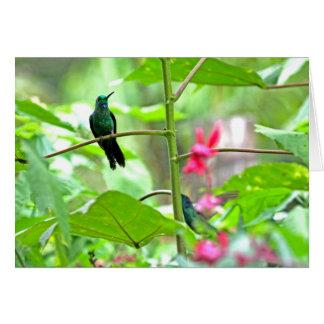 Cartão Colibri e flores tropicais