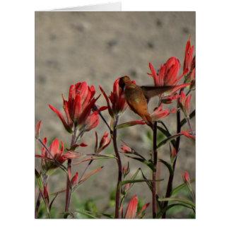 Cartão colibri flw. cardinal