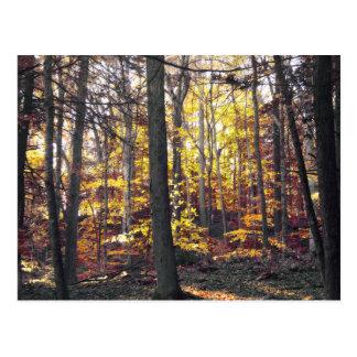 Cartão colorido preto e branco do outono