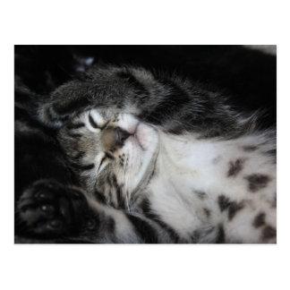 Cartão com a fotografia sonolento bonito do