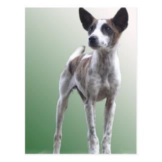 Cartão com crista chinês do cão da mostra cartoes postais
