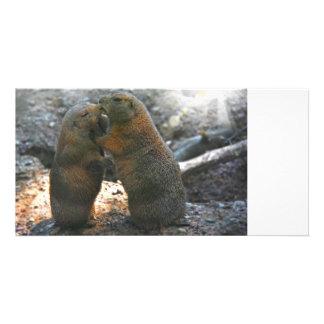 Cartão com fotos com casal bonito da marmota