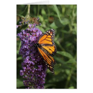 Cartão com fotos da borboleta