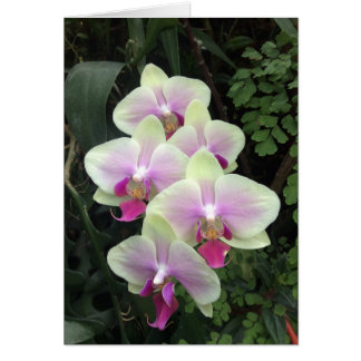 Cartão com fotos da orquídea de Singapore