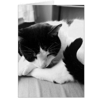 Cartão com fotos do gato do sono