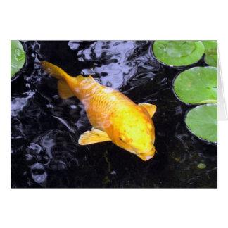 Cartão com fotos dourado dos peixes de Koi
