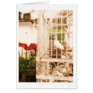 Cartão com fotos original das pombas brancas perto