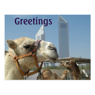 Cartão com os camelos em Dubai