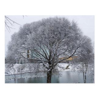 Cartão com salgueiro coberto de neve