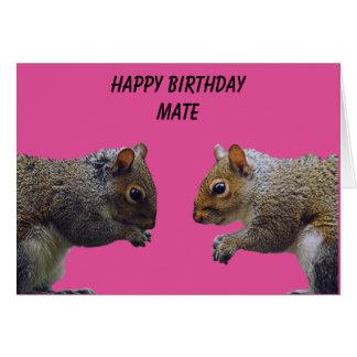 Cartão Companheiro do feliz aniversario de dois esquilos