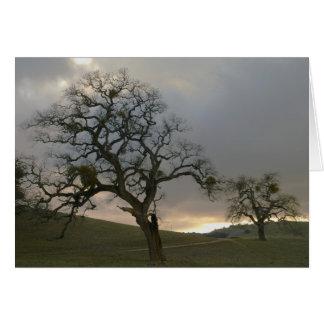 Cartão Companheiros da árvore: Carvalhos do inverno com