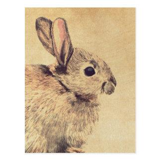 Cartão comum do esboço do Watercolour do coelho