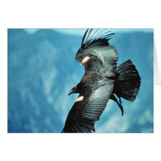 Cartão Condor de Califórnia