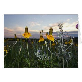 Cartão Coneflower amarelo vibrante