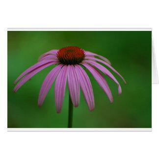Cartão Coneflower roxo