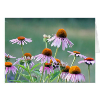 Cartão Coneflowers roxos!