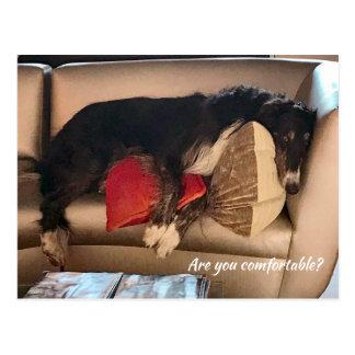 Cartão confortável do Borzoi