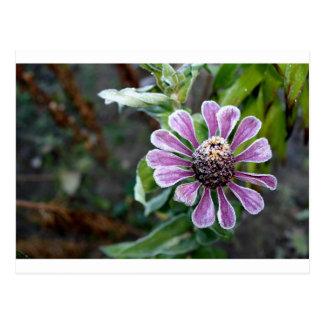 Cartão congelado da flor