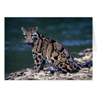 Cartão Contato nublado do Leopardo-olho