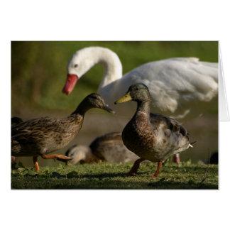 Cartão Convenção do pato