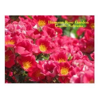 Cartão cor-de-rosa #315n 0315 do espírito