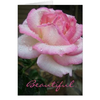 Cartão cor-de-rosa bonito da escritura do 3:11 de