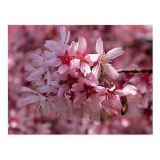 Cartão cor-de-rosa bonito das flores de cerejeira