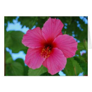 Cartão cor-de-rosa brilhante do hibiscus