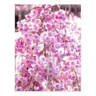 Cartão cor-de-rosa da árvore de salgueiro Weeping