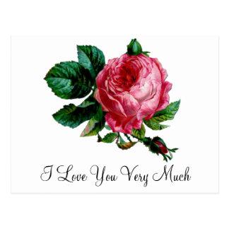 Cartão cor-de-rosa da couve