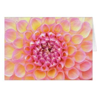 Cartão cor-de-rosa da dália