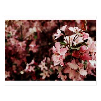Cartão cor-de-rosa da flor