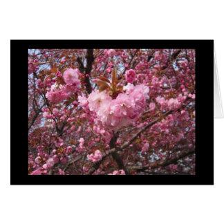 Cartão cor-de-rosa da flor de cerejeira