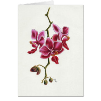 Cartão cor-de-rosa da orquídea