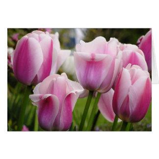 Cartão cor-de-rosa das tulipas