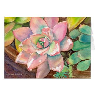 Cartão cor-de-rosa de Echeveria por Debra Lee