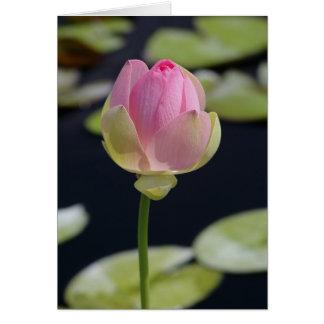 Cartão cor-de-rosa de Lotus