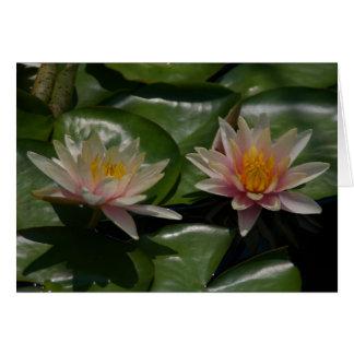 Cartão cor-de-rosa de Lotus Waterlilies