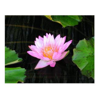 Cartão cor-de-rosa de Lotus Waterlily
