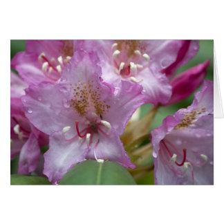 Cartão cor-de-rosa de Rhody