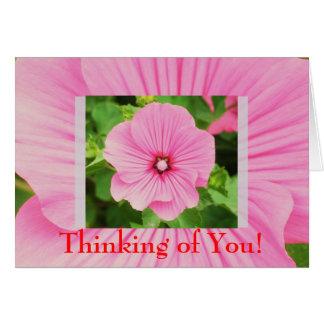 Cartão cor-de-rosa do design da flor do Lavatera