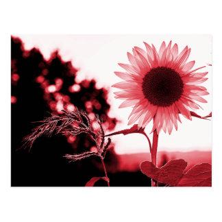 Cartão cor-de-rosa do girassol